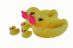 Traveling yellow family duck Royalty Free Stock Image