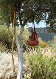 Traveller backpack in olive tree shade Royalty Free Stock Image
