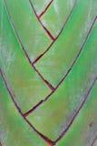 Traveller palm. Details of leaf stalk of traveller palm Royalty Free Stock Image