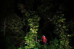 Traveller search and explore through tropical rain forest - Fiel Stock Photo