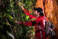 Traveller search and explore through tropical rain forest - Fiel Stock Photos