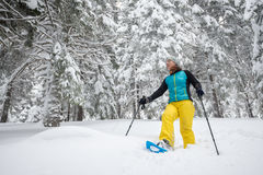Traveller woman is walking on snowshoes among big pines Stock Photo
