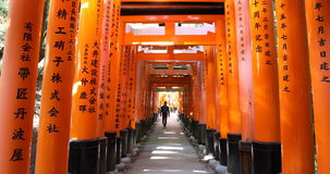 Travellers in Fushimi Inari tunnel. Kyoto, Japan - April 28, 2017: young travellers walking under red torii gates tunnel of Fushimi Inari shrine temple of Kyoto stock video