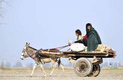 Travellers. A passer by on donkey cart on the busy road of isamabad the capital stock image