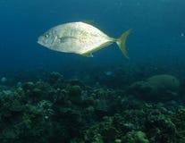 travelli рыб стоковое изображение rf