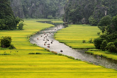 Travelling along paddy fields. Stock Photo