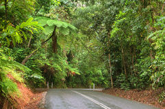 Travelling the Daintree National Park. Daintree National Park, Tropical Queensland, Australia stock photo