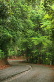 Travelling the Daintree National Park Stock Photo