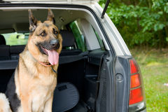 Travelling Dog Royalty Free Stock Photography