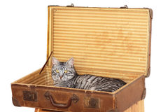 Travelling with pet - tomcat in a suitcase Stock Photo
