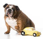 Travelling with pets Royalty Free Stock Photography
