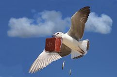 Travelling Seagull With Case Royalty Free Stock Photography