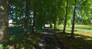 Travelling shot through tree lined driveway in France. stock video footage
