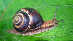 Travelling snail stock video footage