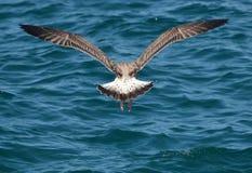 Traversa la simmetria volando Fotografia Stock Libera da Diritti