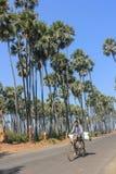 Traversez la ferme de palmiers de date Photo libre de droits