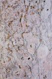 Travertin - de kwaliteitsachtergrond van het Zandsteen Royalty-vrije Stock Afbeeldingen