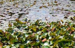 Travertine, die einen Teich bedecken Stockfotos
