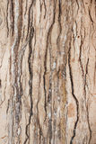 Travertine Marble Royalty Free Stock Photos