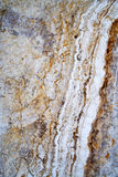 Travertine marble tile. Closeup of a Travertine marble tile with multiple color vein striations Royalty Free Stock Photography