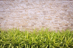Travertine stone wall and decorative garden Stock Images