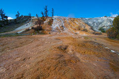 Travertine terrace, Mammoth Hot Springs, Yellowsto Stock Photo