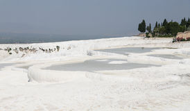 Travertines in Pamukkale Stock Photography