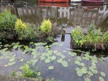 Travertini ed uccello con il suo bambino sul canale in Hoofpdorp Immagini Stock