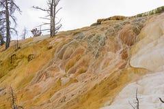 Travertino e árvores hirtos de medo em Yellowstone Fotos de Stock Royalty Free