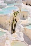 Travertinpools und -terrassen in Pamukkale, die Türkei stockbilder