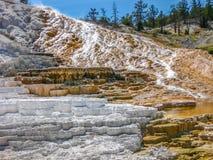 Travertinterrassen Mammoth Hot Springs Stockfotos
