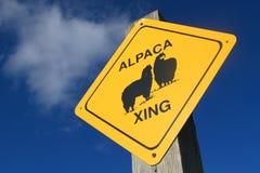 Travesía de la alpaca Foto de archivo