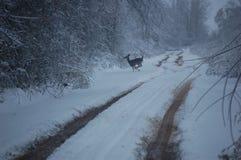 Travesía de los ciervos Foto de archivo