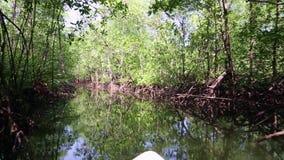 Travesía del río en bosque del mangle en la selva almacen de video