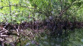 Travesía del río en bosque del mangle en la selva almacen de metraje de vídeo