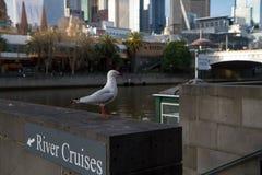 Travesías del río de Melbourne en el Yarra Imágenes de archivo libres de regalías