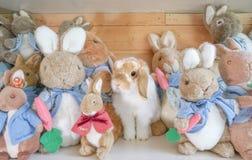 Travestimenti del coniglio di Holland Lop tra altri caratteri molli del coniglio della bambola della peluche da Peter Rabbit Fotografie Stock Libere da Diritti