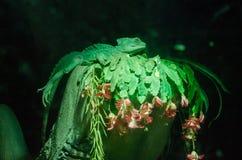 Travestimento verde del camaleonte su un ramo verde fotografie stock libere da diritti