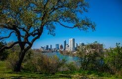 Travis Heights Overlook Amazing Tree, der über Austin Texas Skyline Colorado River sich verdreht Lizenzfreies Stockfoto