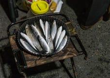 Travou recentemente peixes do chifre dourado, Istambul Uma cubeta de peixes do salmonete e de uma caixa plástica da sardinha fotos de stock royalty free