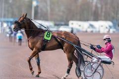 Travsport i Sverige Royaltyfri Fotografi