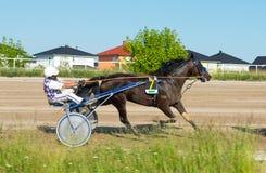 Travsport på den Karlshorst löparbanan Royaltyfri Bild