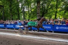 Travsport på gatan i den Göteborg staden Royaltyfri Bild
