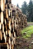 travt upp trä Royaltyfri Fotografi