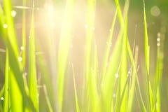 traw światła Zdjęcie Stock