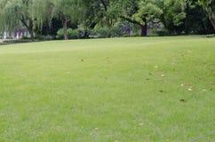 Traw drzewa Zdjęcia Stock