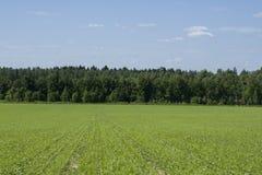 Traw drzewa i pole Kształtujemy teren na zewnątrz miasta Fotografia Royalty Free