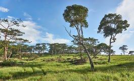 Traw drzewa w, pole i Obrazy Royalty Free