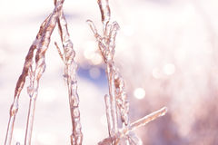 Traw gałąź marznąć w lodzie Zamarznięta trawy gałąź w zimie Zdjęcie Royalty Free