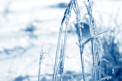 Traw gałąź marznąć w lodzie Zamarznięta trawy gałąź w zimie Obraz Stock